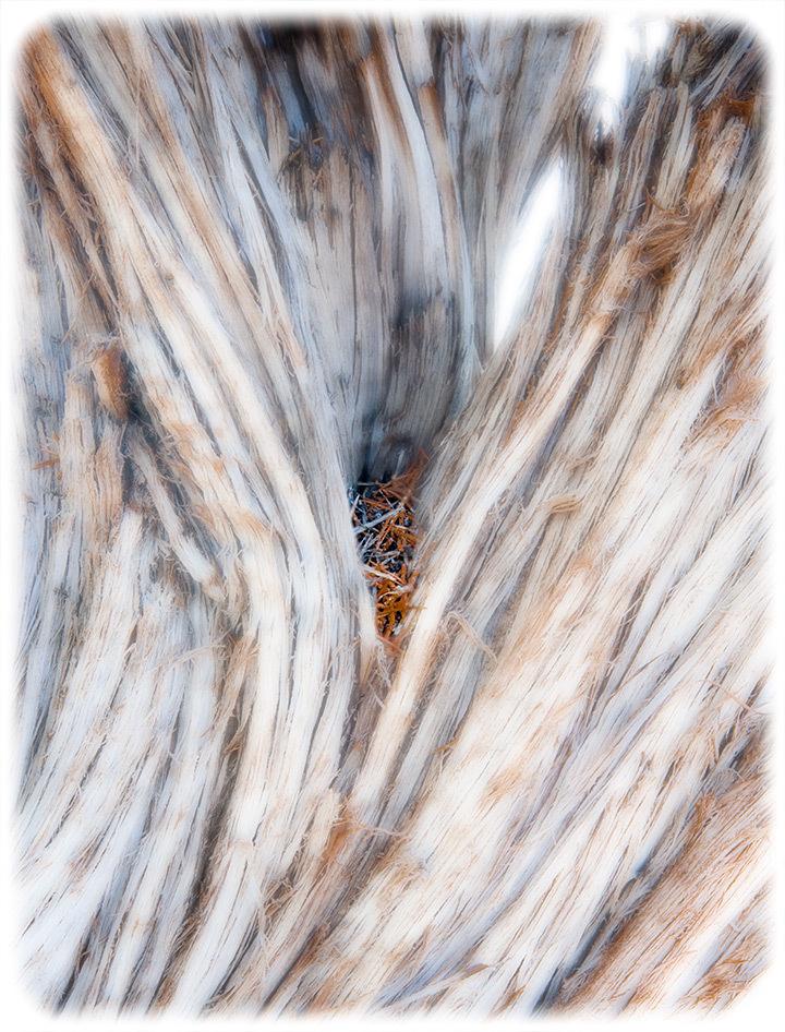 Wood:  Juniper Needles