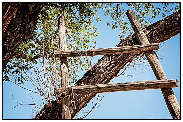 Ladder in a Tree