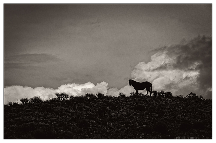 Indian Pony on a Hillside