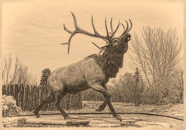 Sagrado Elk