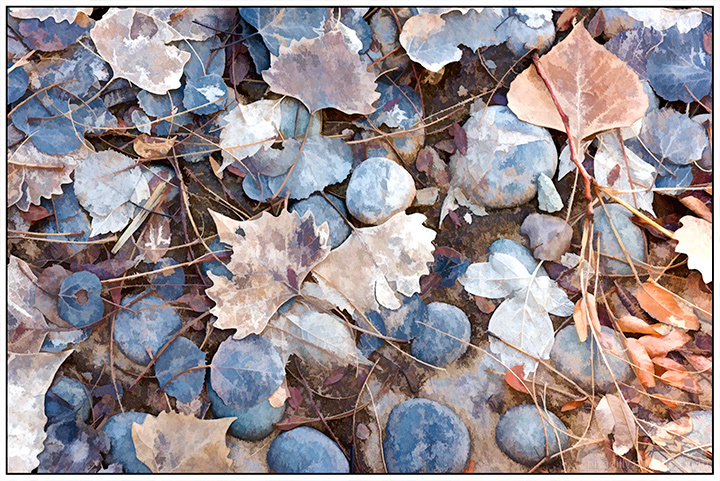River Rocks and Leaves