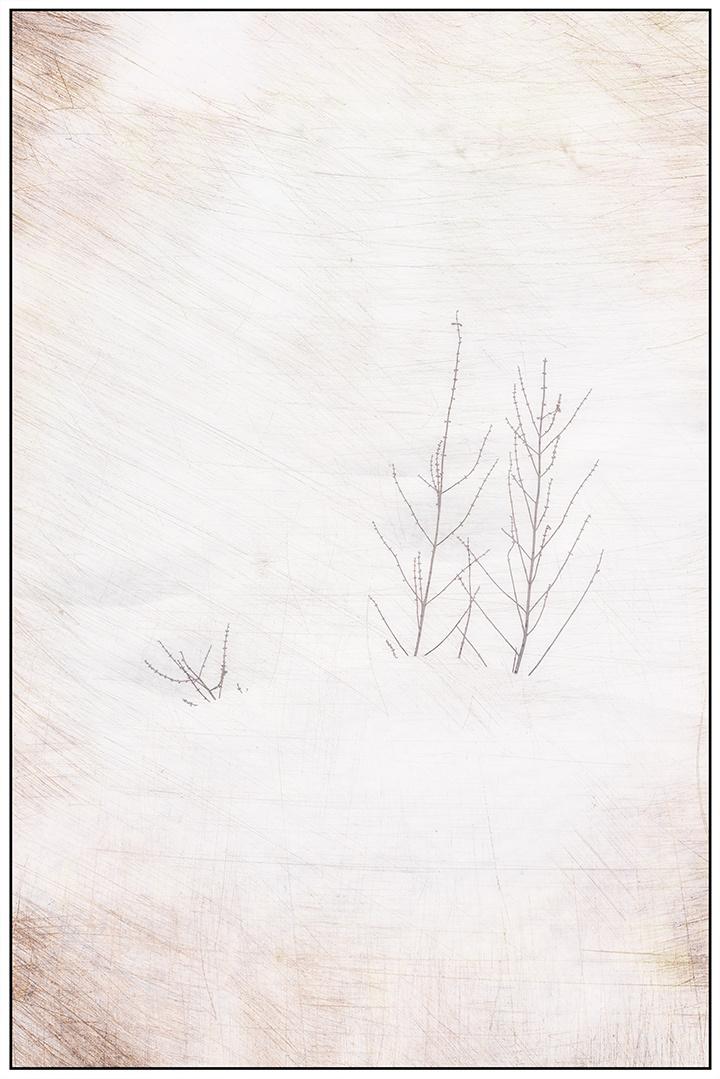 Snow Poke