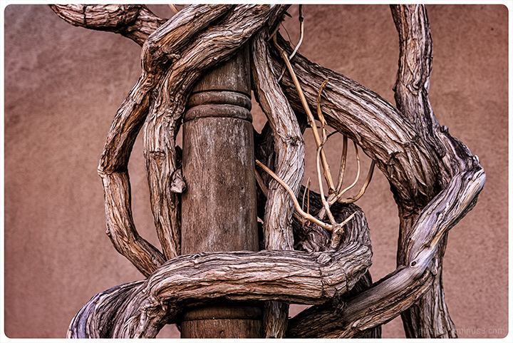 Vines on Post