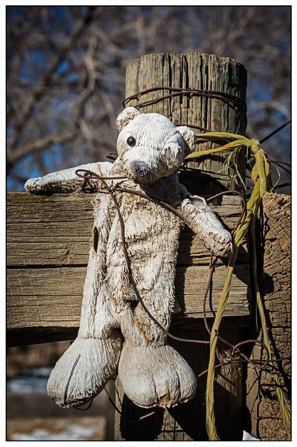 One-Eyed Teddy