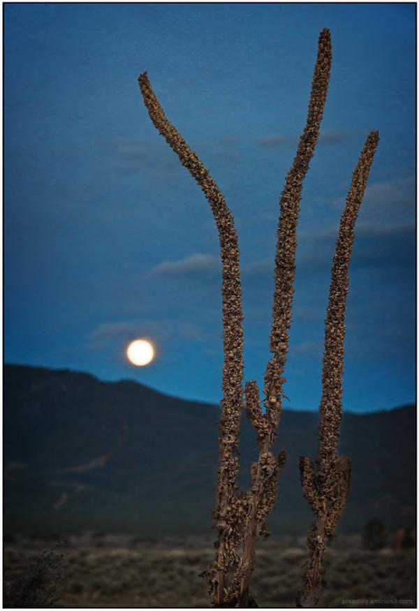 Sotol and Rising Moon
