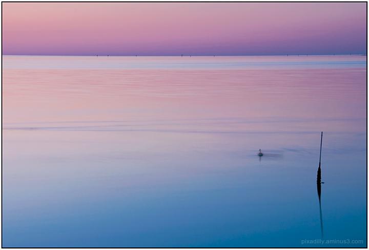 Purple Sea - Reimagined
