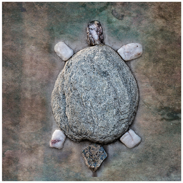 Animal Depictions:  Turtle
