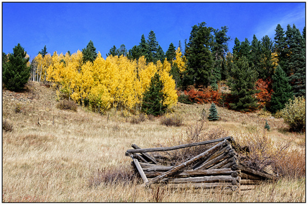 Taos Autumn:  Carson National Forest