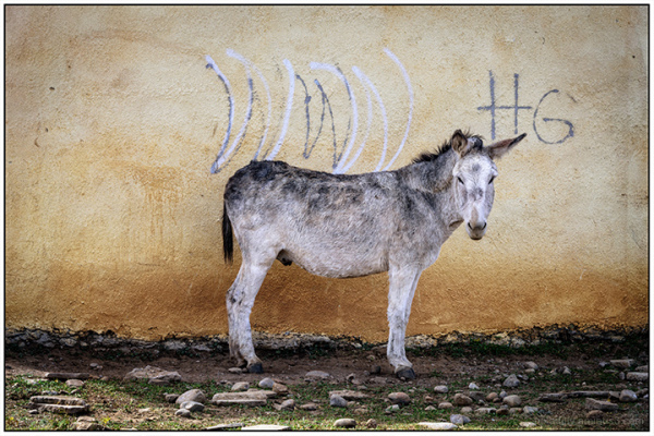 Burro and Graffiti