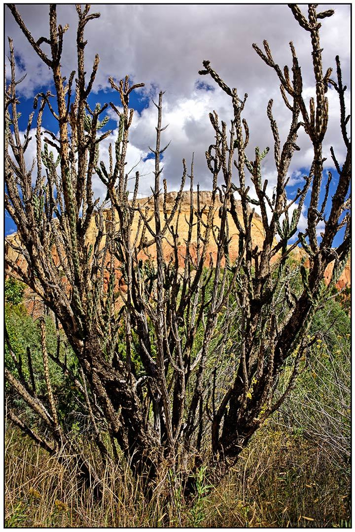 Cactus at Ghost Ranch