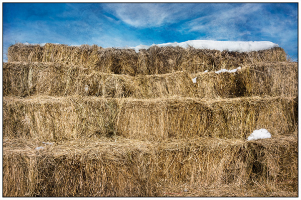 Hay Bales with Snow