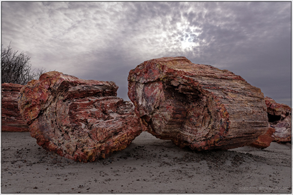 Petrified Forest National Park #1