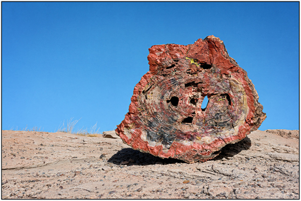 Petrified Forest National Park #4
