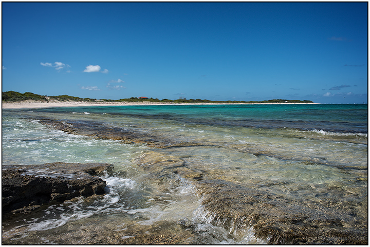 Loblolly Bay