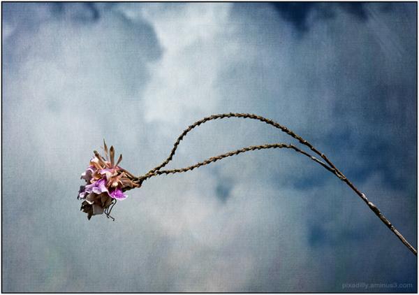 Wild Anegada Orchid