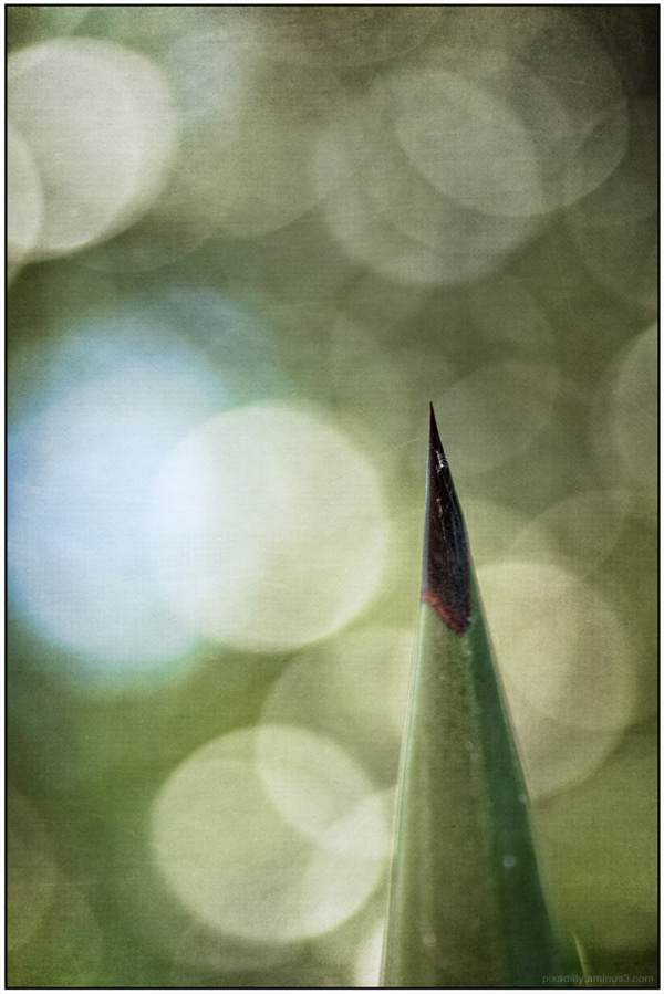 Bayonet Spear with Bokeh