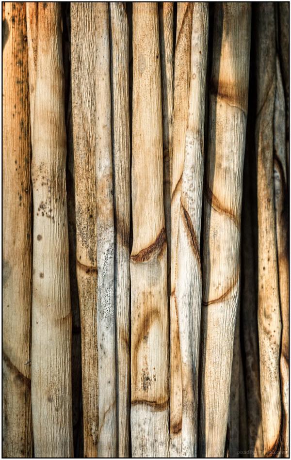 Yucca Stalks