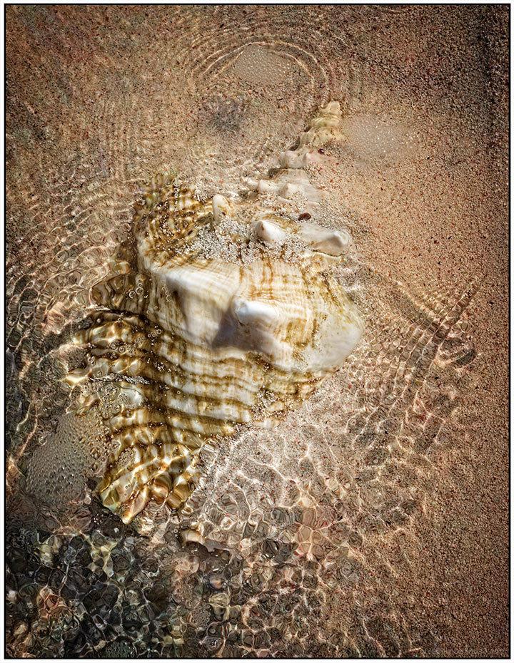 Underwater Conch