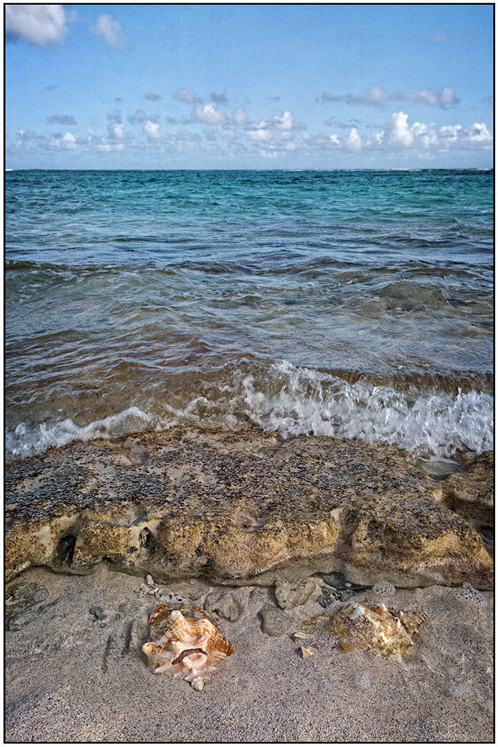 Conchs on the Shoreline