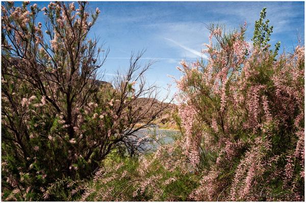 Spring Blooms Along the Rio Grande