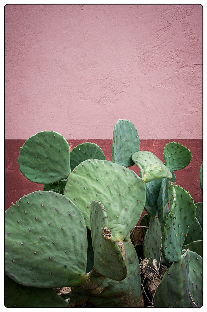 Cactus with Pink Wall