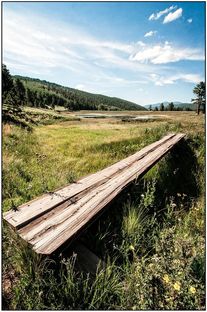 Tree Bridge - Shuree Ponds