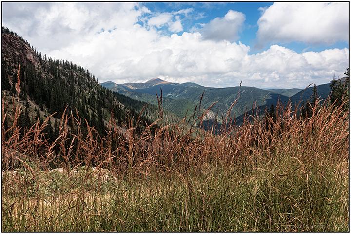 Grasses at Kachina Peak