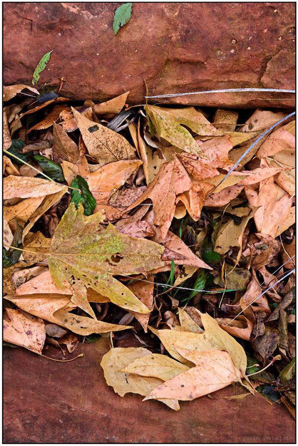 Leaves in Sandstone