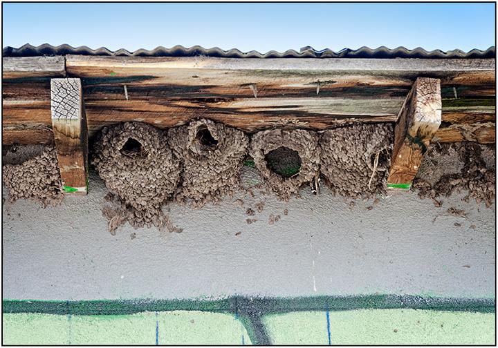 Empty Nests