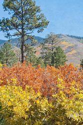 Fall Color   Lama