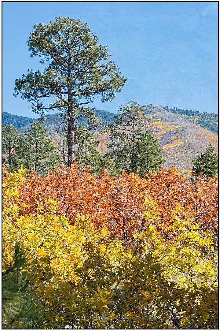 Fall Color - Lama