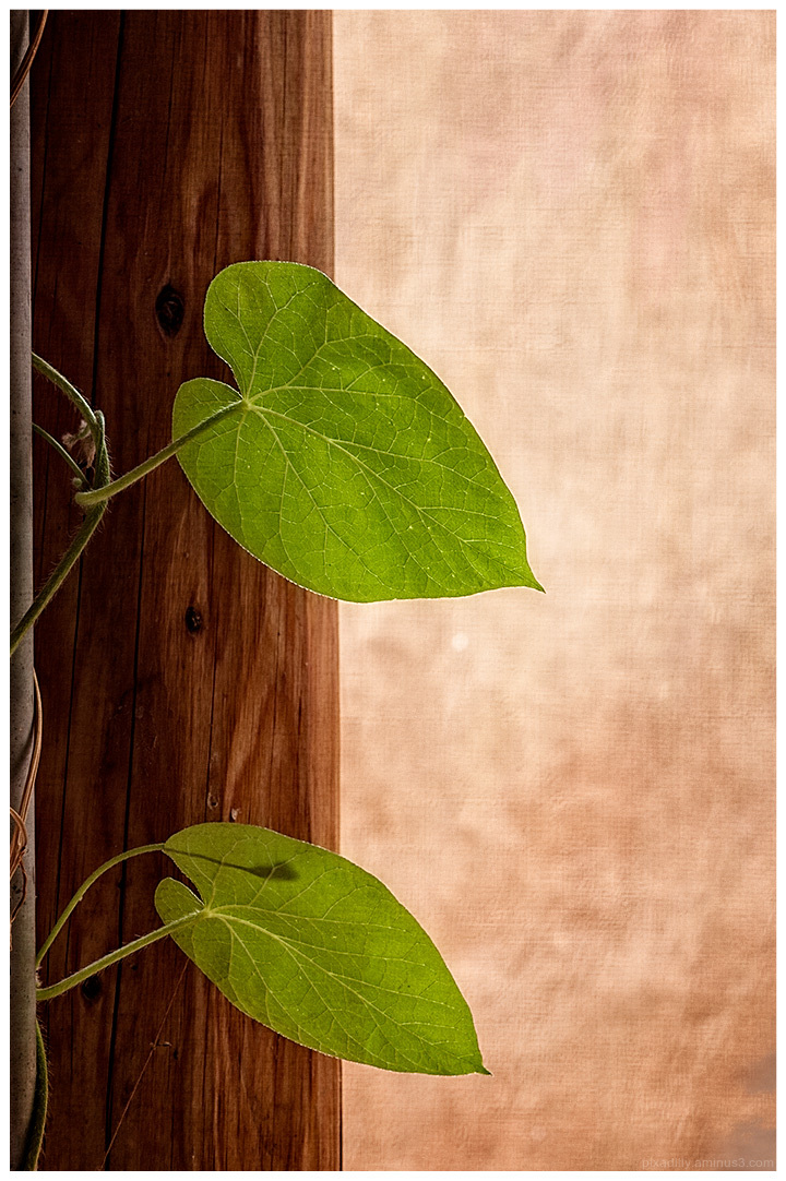 Minimalism:  Vine Leaves