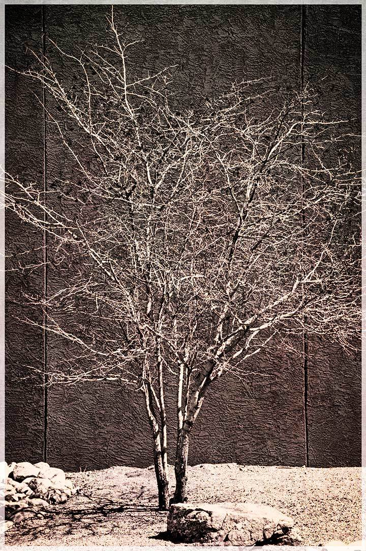 Quiet Images:  School Tree