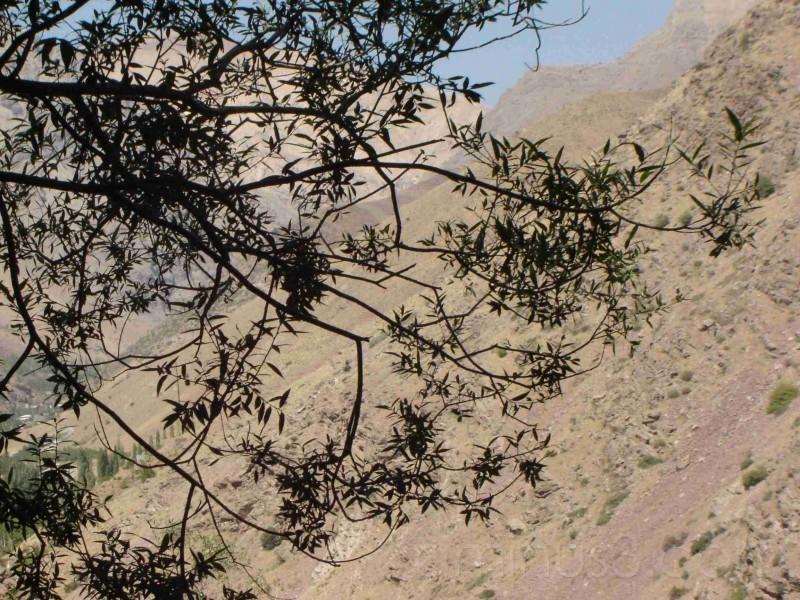 Tree & Mountain 1