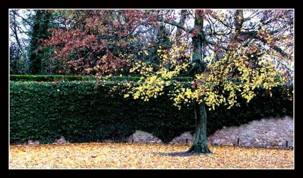 Wall of eden