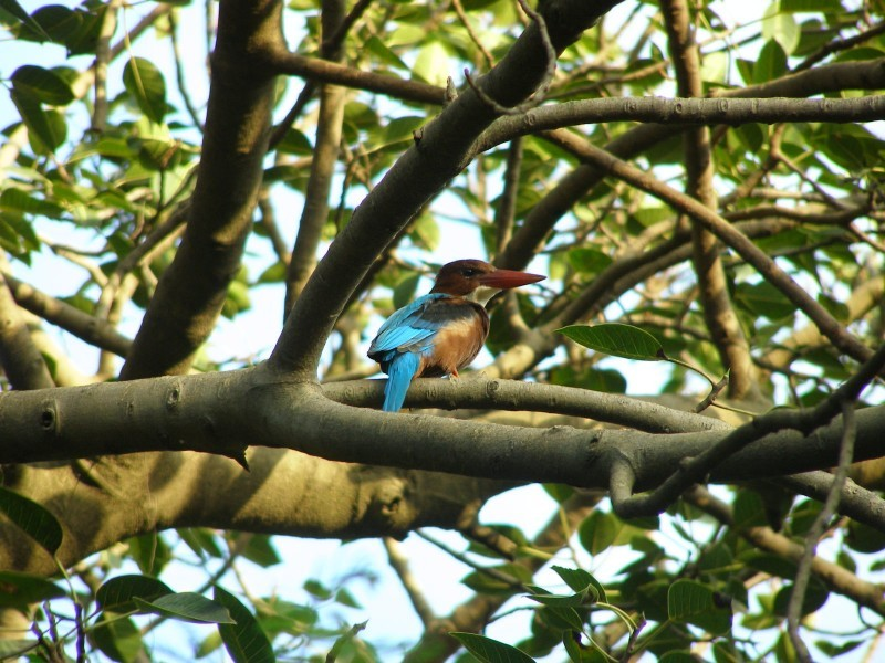 Kingfisher in the woods