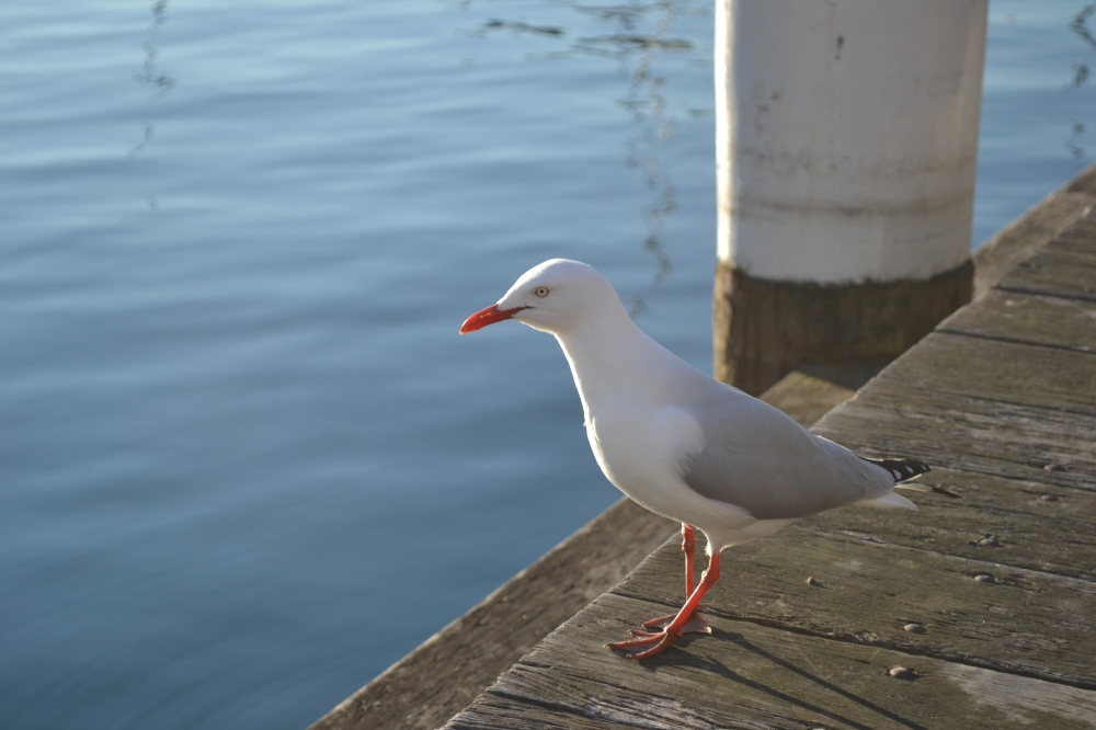 A sea gull in the afternoon