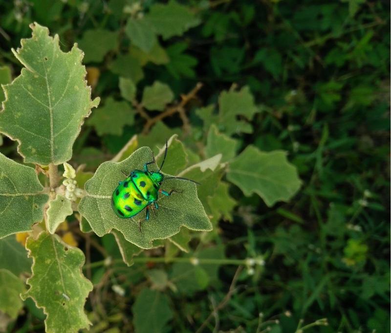 bright beetle on foliage