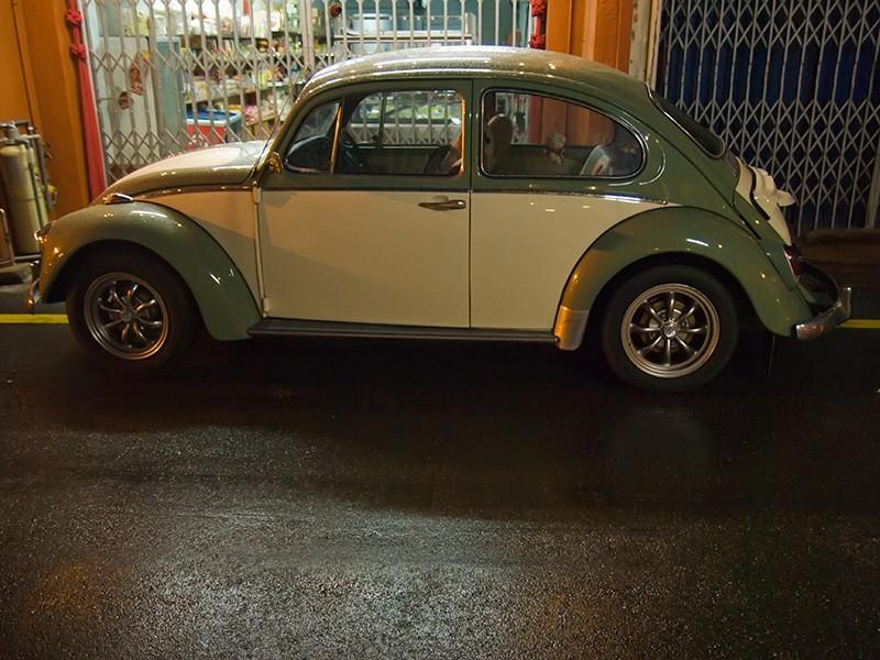 Malaysian Beetle