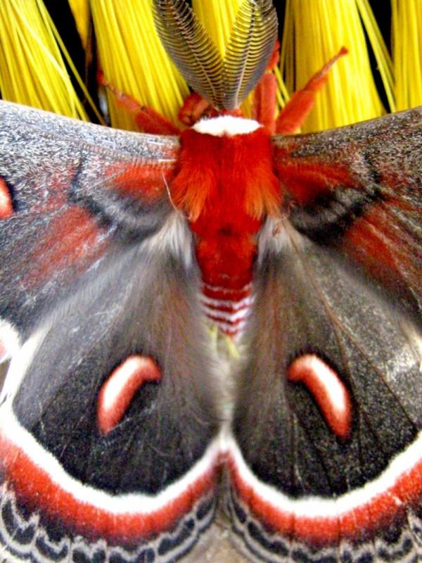 Monster Moth