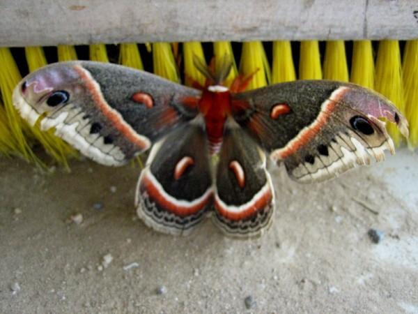 utter mothness