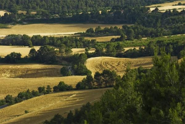 montbui fields