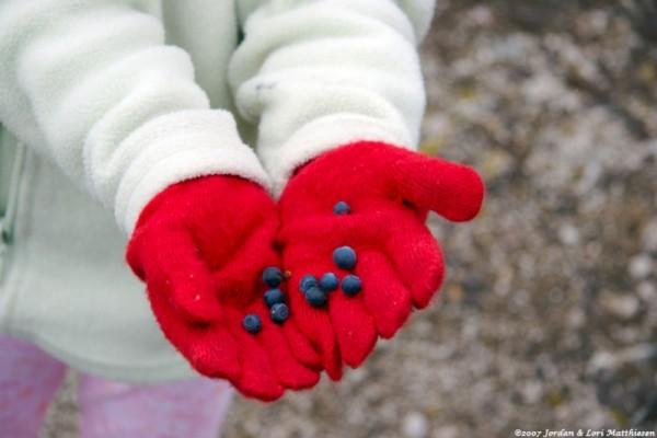 A handful of alaskan wild berries