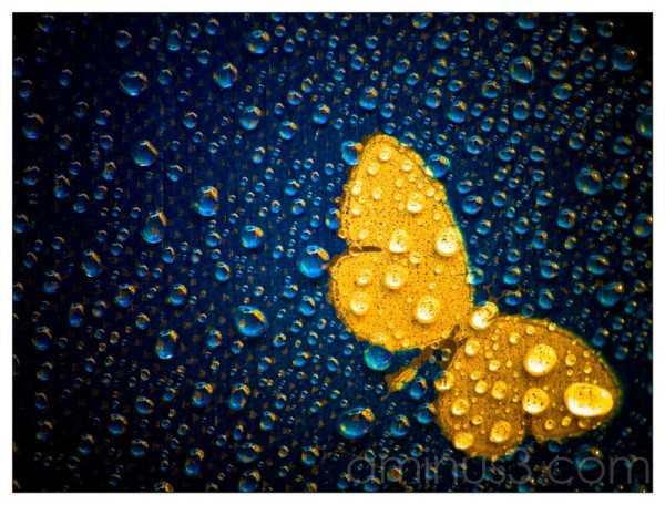 Life – Community Of Water Droplets