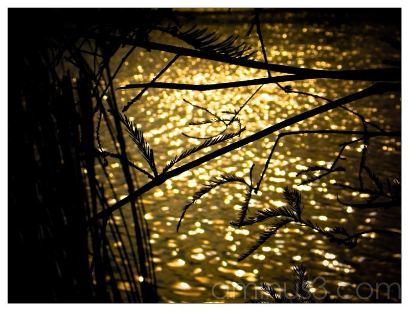 Life – Blurred Golden Water