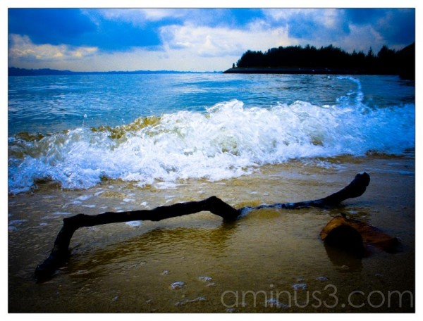 Life – Splashing Water, Broken Branch & Dried Leaf