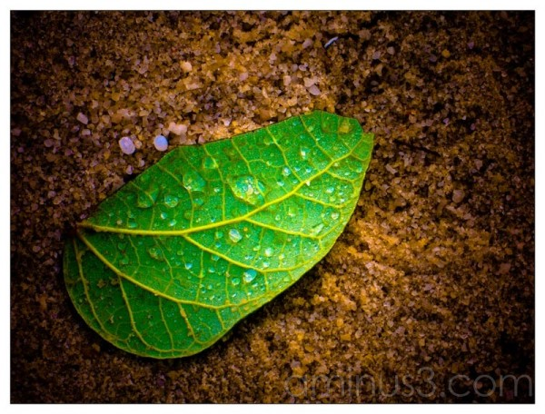 Life – Leaf With Water Droplets