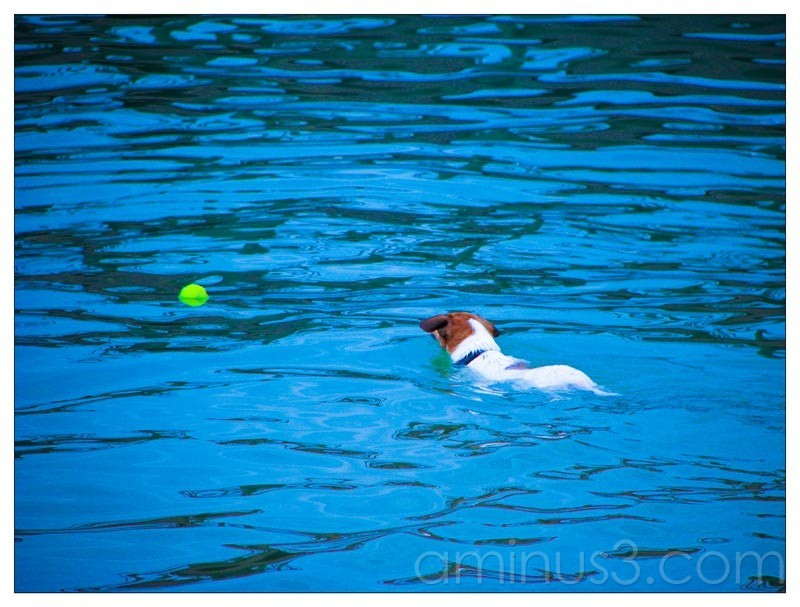 Life – Super Dog In The Water (Animal Day)