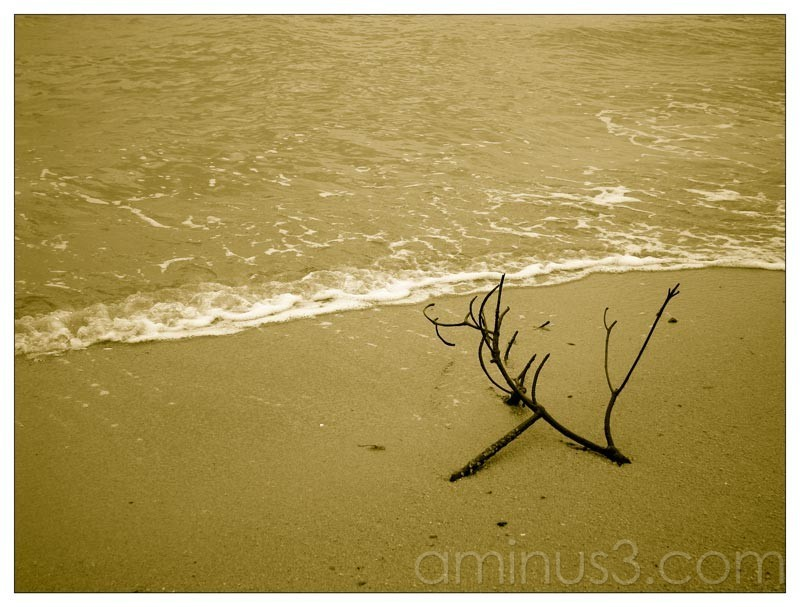 Life – Broken Branch By The Water