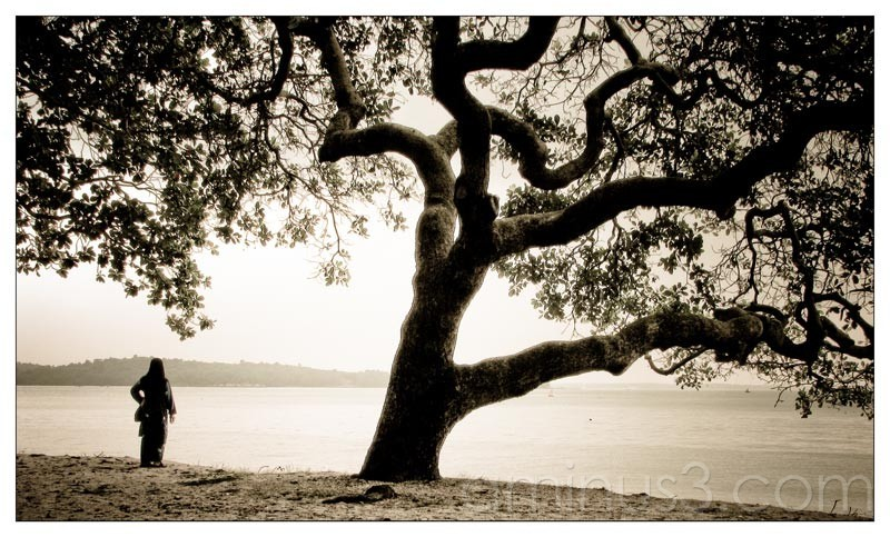 Life – Alone Under A Big Tree By The Water